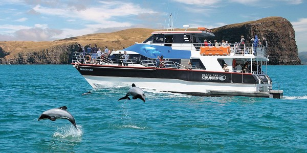 Harbour Cruise NZ