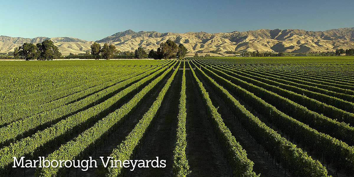 Explore Vineyards Marlborough