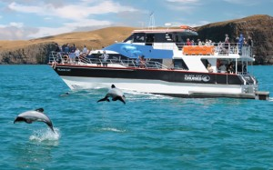 Cruise with Dolphins, Akaroa