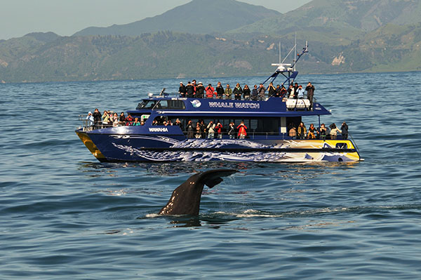 whale_watch