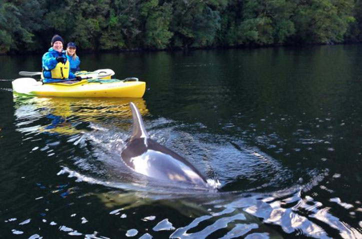 doubful_kayak_dolphin